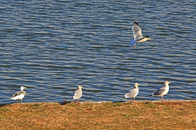 waterbird1209_x660.jpg
