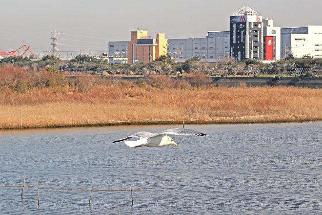 waterbird1231_x660.jpg