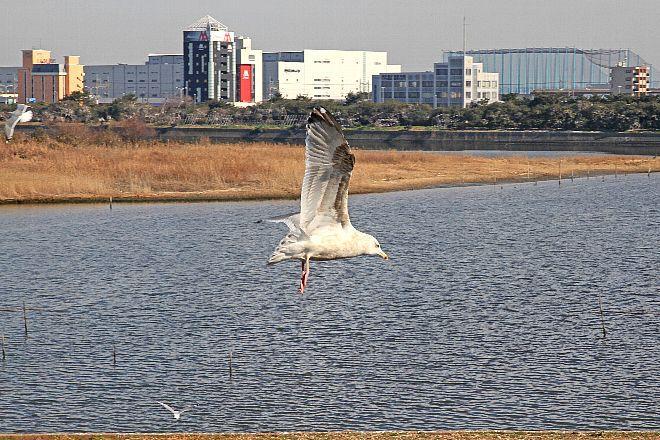 waterbird1232_x660.jpg