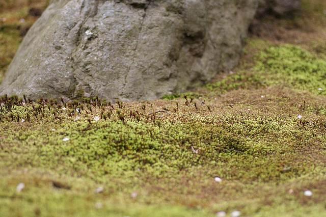 Kamakura08b52_x640.jpg