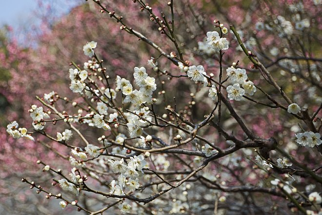 Kamakura1409_x660.jpg