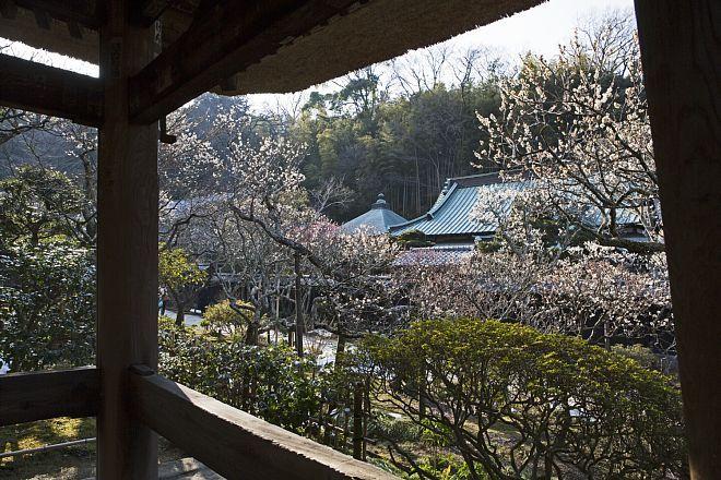Kamakura1426_x660.jpg