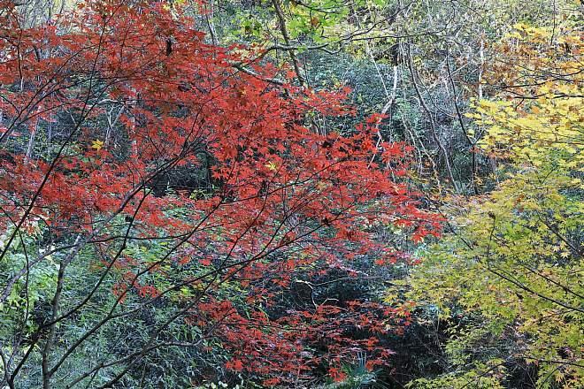 Kamakura1817_x660.jpg