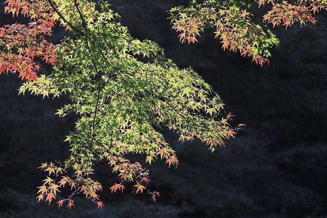 Kamakura1822_x660.jpg