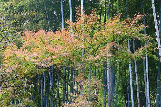 Kamakura1830_x660.jpg