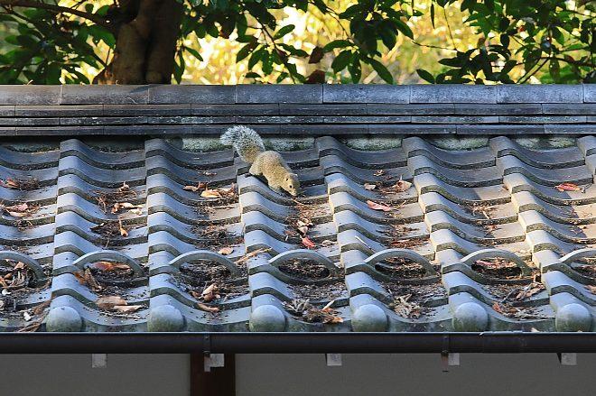 Kamakura1847_x660.jpg