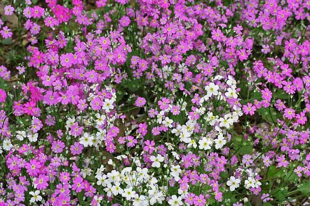 Sakura0827_x640.jpg