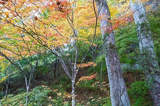autumn1506_x660.jpg