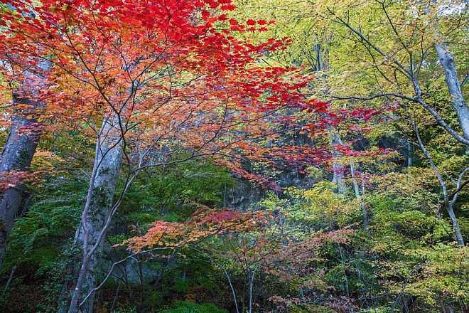 autumn1507_x660.jpg