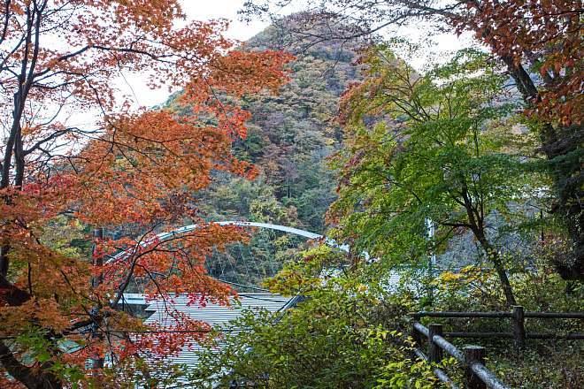autumn1514_x660.jpg