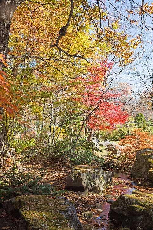 autumn1531_y8.jpg