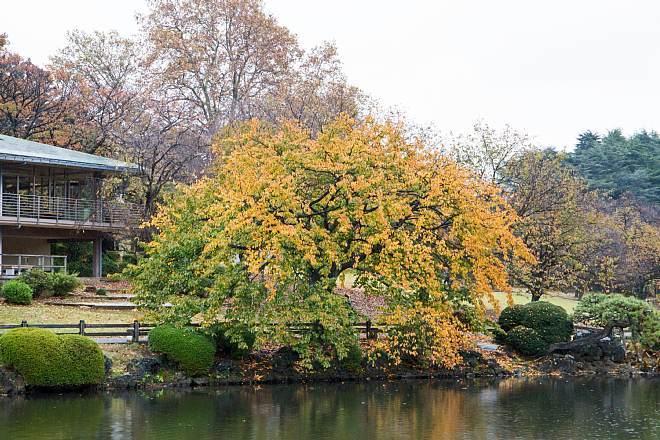 autumn15b04_x660.jpg