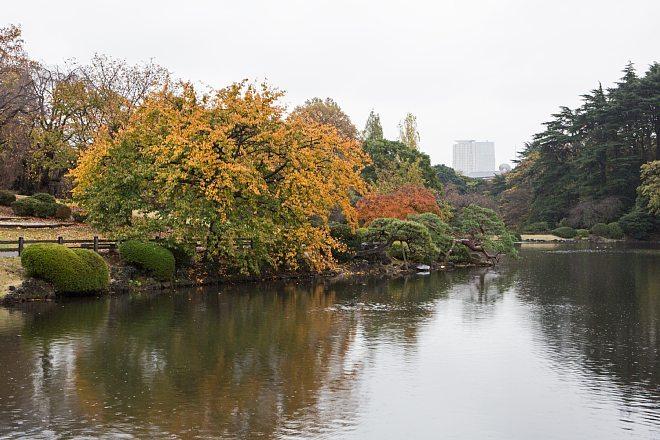 autumn15b05_x660.jpg