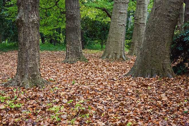 autumn15b17_x660.jpg