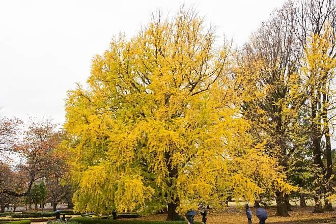 autumn15b22_x660.jpg