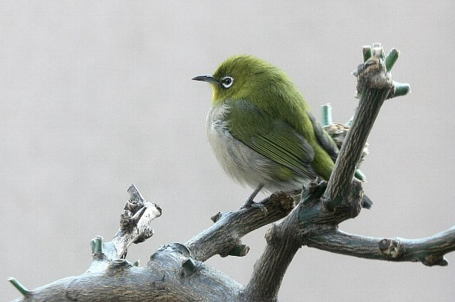 bird09a01_x640.jpg