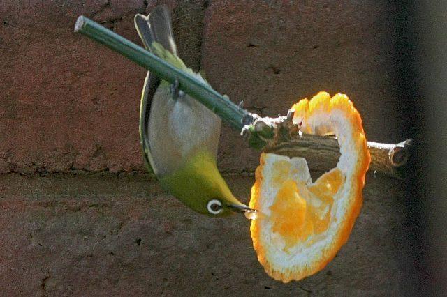 bird09a02_x640.jpg