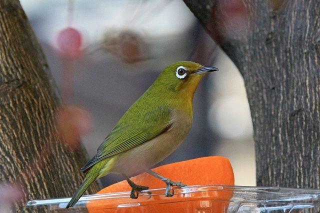 bird09a04_x640.jpg