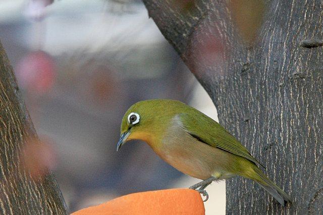 bird09a08_x640.jpg