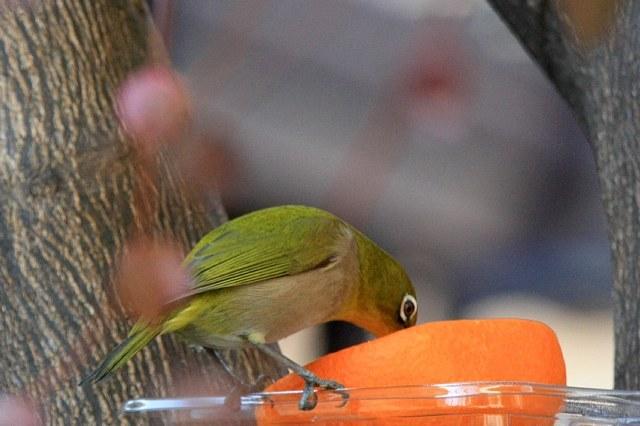 bird09a14_x640.jpg