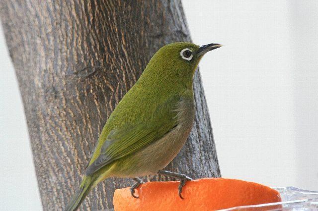 bird09a17_x640.jpg