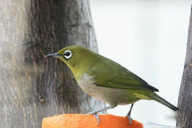 bird09a18_x640.jpg
