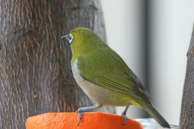 bird09a25_x640.jpg