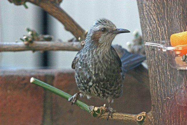 bird09a29_x640.jpg