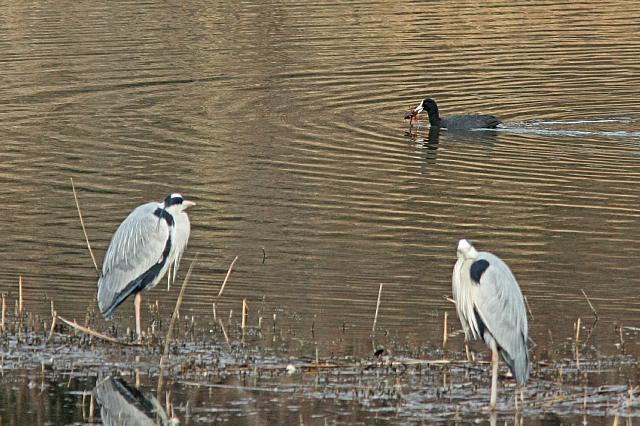 bird10a10_x640.jpg