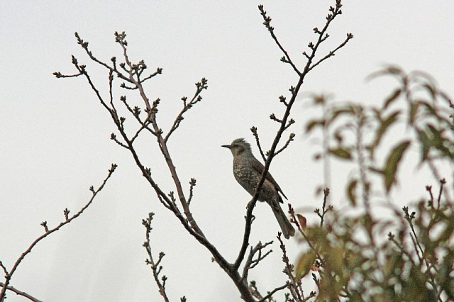 bird10a18_x640.jpg