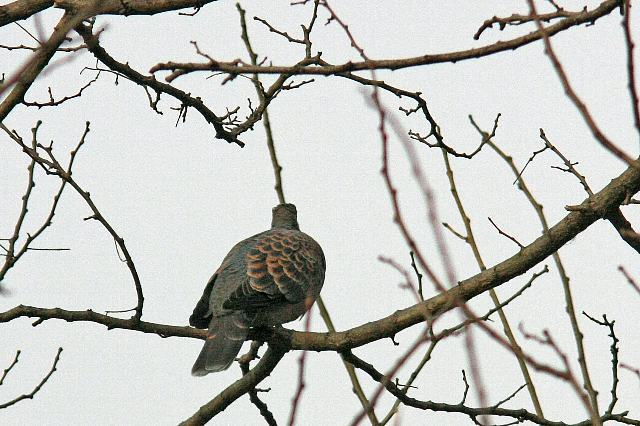 bird10a24_x640.jpg
