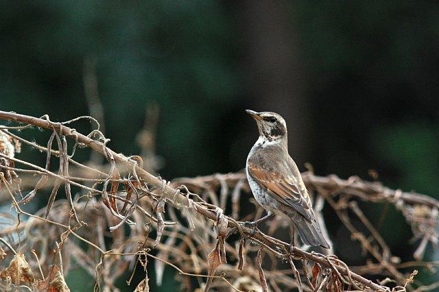 bird10a25_x640.jpg