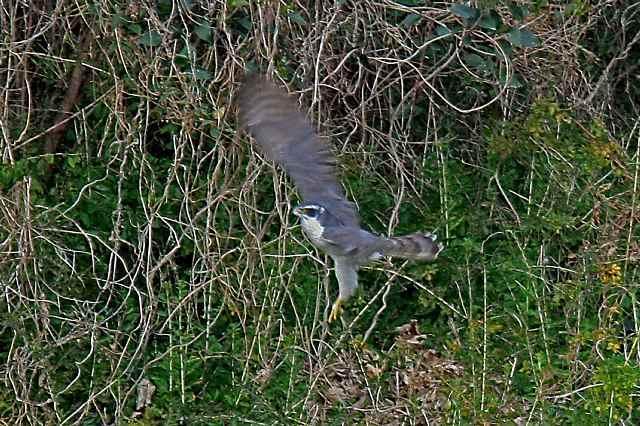 bird10a35_x640.jpg