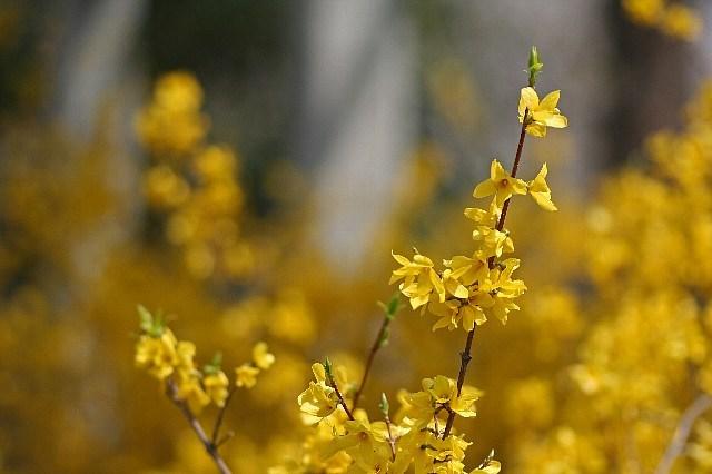 flower08a06_x640.jpg
