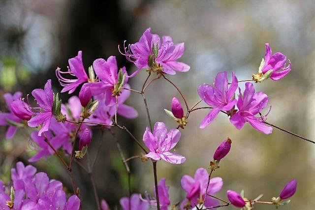 flower08a22_x640.jpg