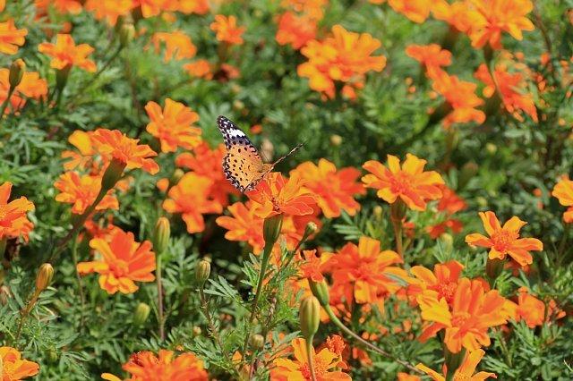 flowerpark1003_x640.jpg