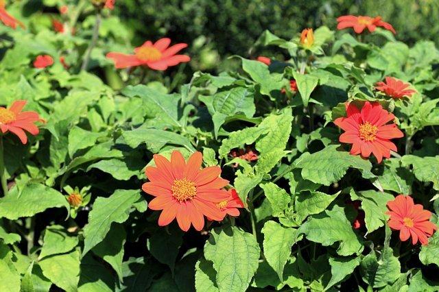 flowerpark1008_x640.jpg