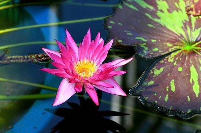 flowerpark1022_x640.jpg