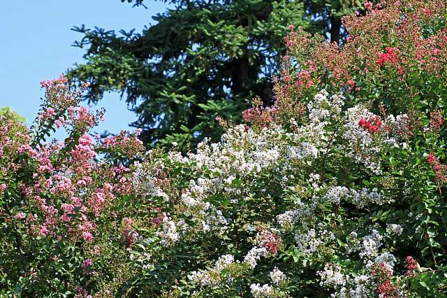 flowerpark1025_x640.jpg