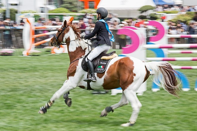horse1503_x660.jpg