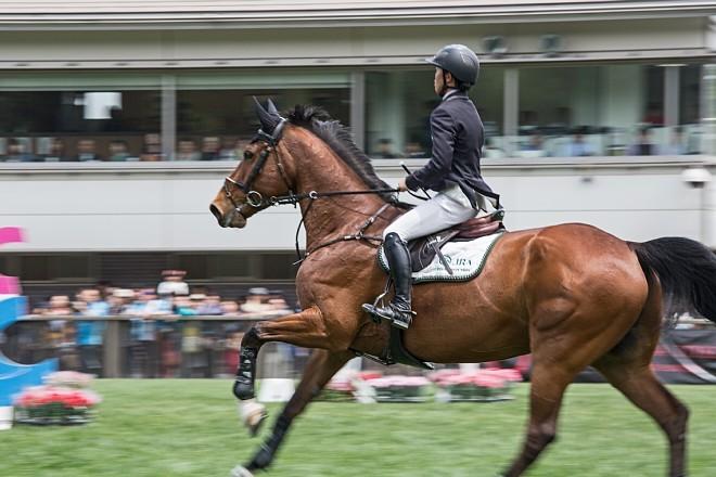 horse1505_x660.jpg