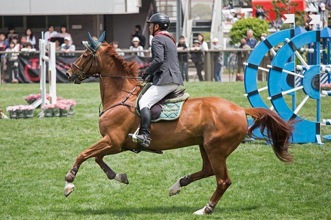 horse1506_x660.jpg