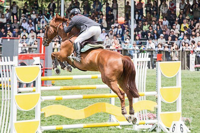 horse1507_x660.jpg