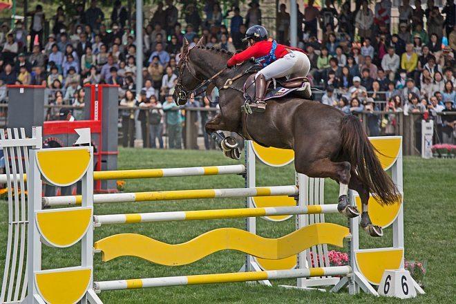 horse1514_x660.jpg