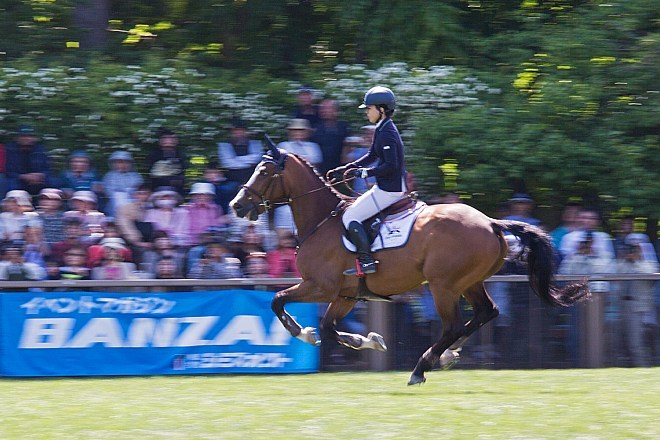 horse1544_x660.jpg