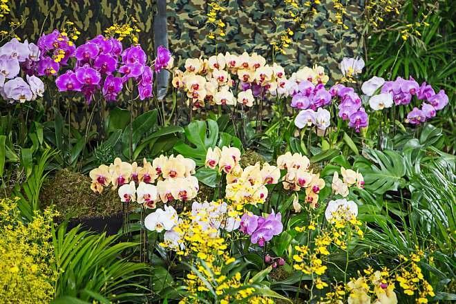 orchid1808_x660.jpg