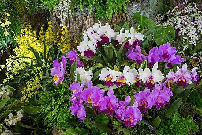 orchid1823_x660.jpg