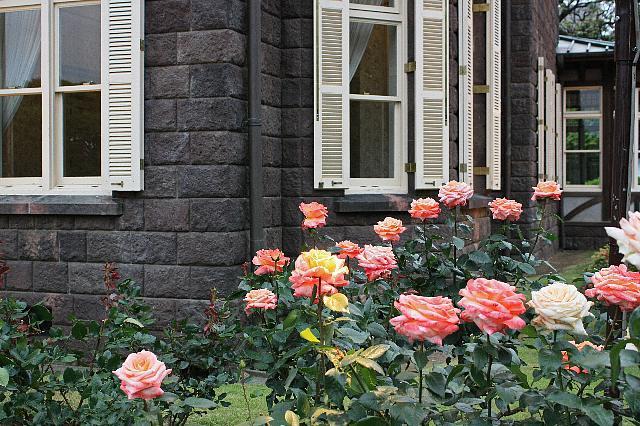 rose0901_x640.jpg