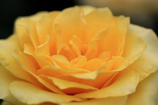 rose0913_x640.jpg
