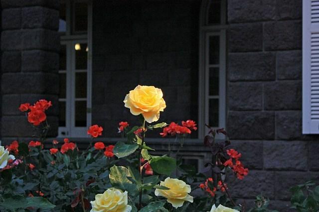 rose0937_x640.jpg